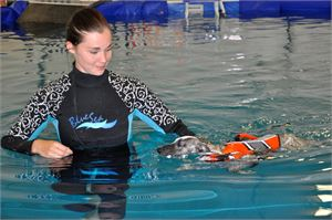 Vajaan puolen vuoden ikäinen Zombi opettelee uintitekniikkaa Lotta Lindbergin ohjauksessa. Pelastusliivit koiran yllä helpottavat harjoitusta.