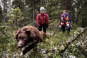 Australianpaimenkoira Poke opetteli viikonlopun aikana ihmisten ja esineiden etsintää maastossa. Taustalla tilannetta seuraavat koiran omistaja Meeri Kivimäki ja koirakouluttaja Riitta Pääkkö.
