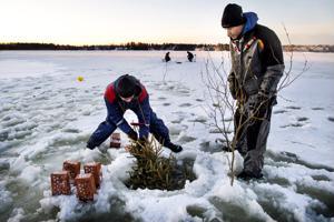 Joulukuuset kalojen kutualustoiksi Pohjanlahdelle. Miika Mild ja Markus Sällinen upottavat joulukuusia jään läpi.