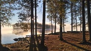 Koirasalmea Salamajärven kansallispuistossa.