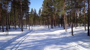 Kalajoen Hiekkasärkillä hiihtoladut ovat vielä erinomaisessa kunnossa.