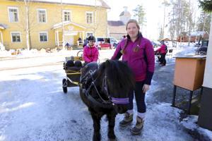 Leif-poni oli töissä ajeluttamassa lapsia Veikkolan kevätpörinöillä. Heidi Läspä ja Kamilla Hakkarainen ohjasivat. Vetelissä sijaitsevan Veikkolan nuorisoseuran keltainen ulkovuori aiotaan tulevana kesänä maalata.