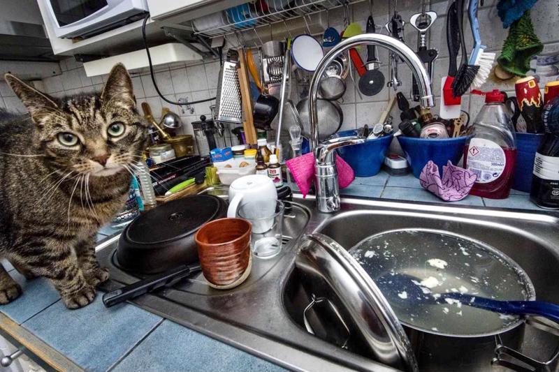 Kotieläimet ja pursuileva tiskipöytä kuuluvat ehkä asunnon omistajan arkielämään, mutta eivät asuntoesittelyyn. Mitä enemmän asunnossa on avaraa tilaa, sen paremman kuvan ostaja kodista saa.
