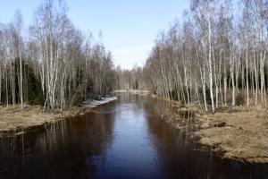 Kokkolassa Perhonjoen sivuhaarassa, Vitsarin ja Rödsön välillä, vesi on nousemassa yli äyräidensä.