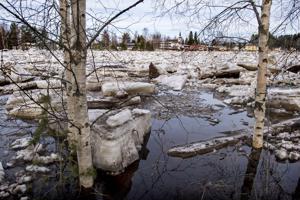 Viikonloppu on vetinen sekä tulvien että sään osalta. Tämä tulva on perjantailta Alavieskasta, jossa Kalajoki tulvi pihoille ja pelloille.