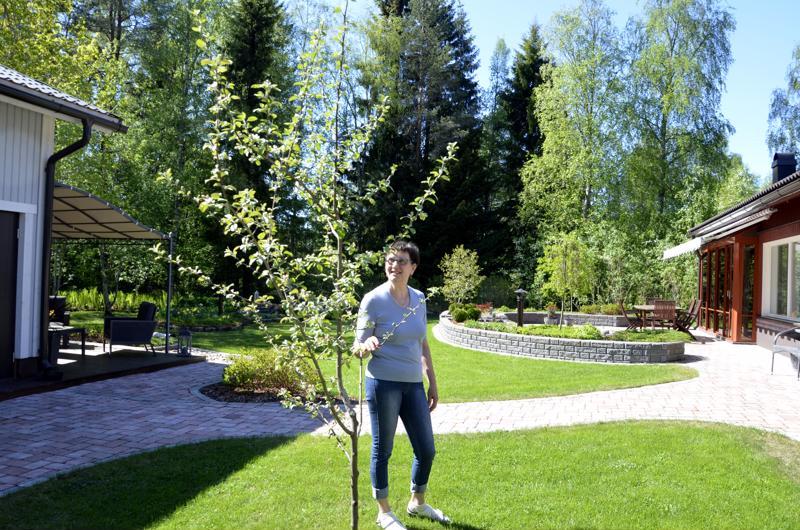 - Sain viimein omenapuun, Kaisa Mäkelä kertoo yhden puutarhaunelmansa toteutumisesta. Varaston rakentamisrytäkässä pihaa myllättiin niin, että Mäkelät kääntyivät ammattipiharakentajien puoleen ja ovat tyytyväisiä lopputulokseen.