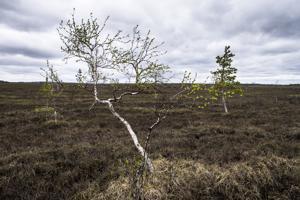 AA Sakatti Mining Oy:n merkittävä kupari- ja nikkeliesiintymä sijaitsee Sodankylässä kaksinkertaisesti suojellulla alueella. Viiankiaapa on Natura 2000- ja soidensuojelualue.