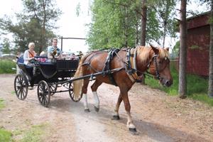 Talonpoikaismuseo Katvalan alueella järjestettävä kotieläinpiha on yksi Kapinaviikon suurimmista vetonauloista. Viime vuonna kävijöitä oli jopa yli 7000, ja avajaispäivänä heille tarjottiin myös hevosajelua.