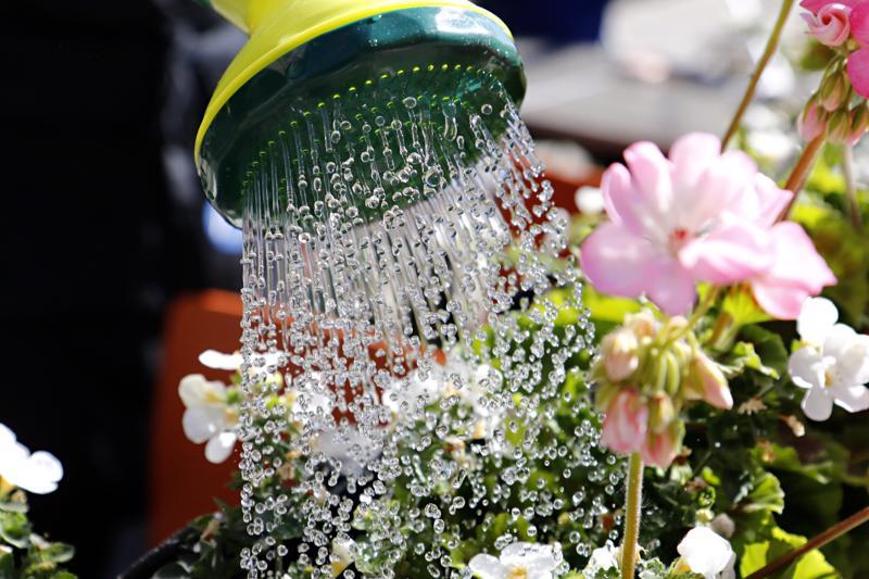 Kukkia ja muita kasveja pitää kastella kuivalla tarpeeksi. Toistuvat niukat kastelut aiheuttavat sen, että kasvit kasvattavat juuria lähelle mullan pintaa ja silloin juuret ovat entistä herkempiä kuivumaan.