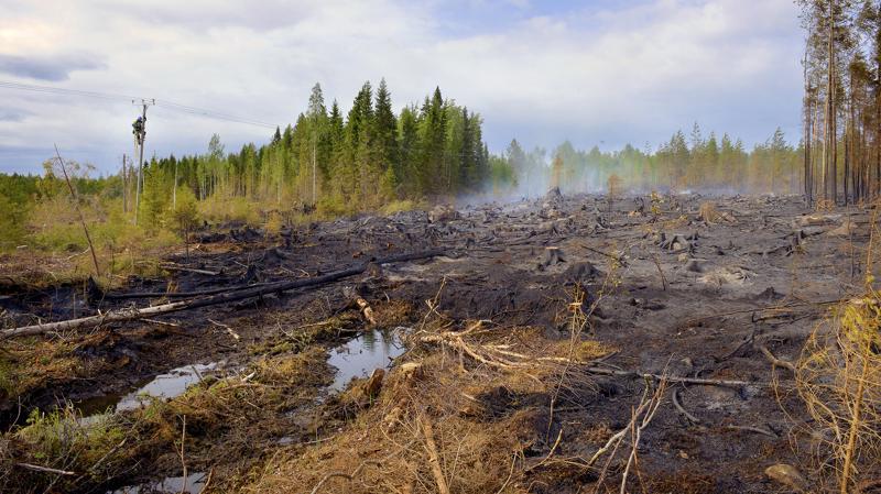 Toholammilla on sammuteltu metsäpaloa maanantaina jo puoli kolmesta lähtien.