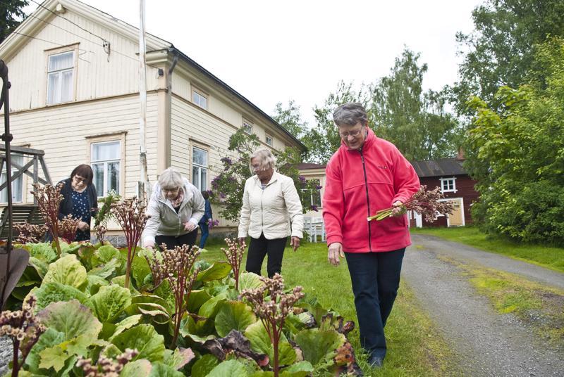 Ritva Andersson,  Leena Wargh, Gunvor Hongell ja Anna Lisa Uusitalo siistivät Wissin talon pihapiiriä.