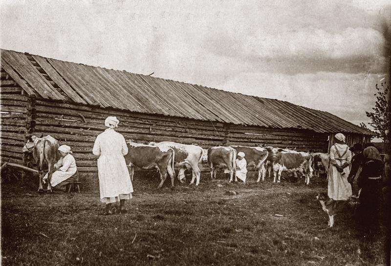 Lypsykilpailu käynnissä Karvoskylän karjanäyttelyssä vuonna 1921.