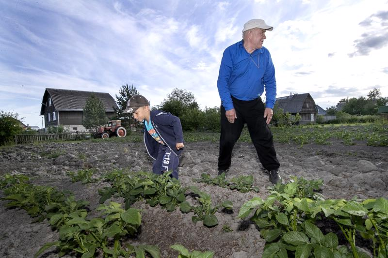 Viktor Kirjonen pojanpoikansa Eemelin kanssa perunapellolla. Viktor kasvattaa perunaa omiksi tarpeikseen.
