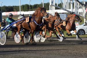 Ylivieskan Helätin-ajossa keskäkuussa loistanut Virin Camilla on yksi kuningatarkisaan ilmoitetuista. Saman lähdön hevosista on ilmoitettu kisaan myös yhdeksän muuta tammaa. Muun muassa Vilma Lyydia ja Ryti-Tyttö.