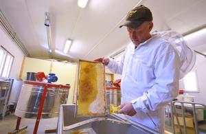 Kari Vääräkankaan mukaan hunajasato on noin kaksi viikkoa etuajassa helteisen toukokuun johdosta.