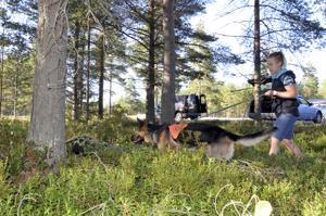 Henkilöetsintäharjoituksissa ihminen piiloutuu metsään maastopeitteen alle. Kuvassa Jenni Palolan Xepe-koira harjoittelee palveluskoirataitojaan.