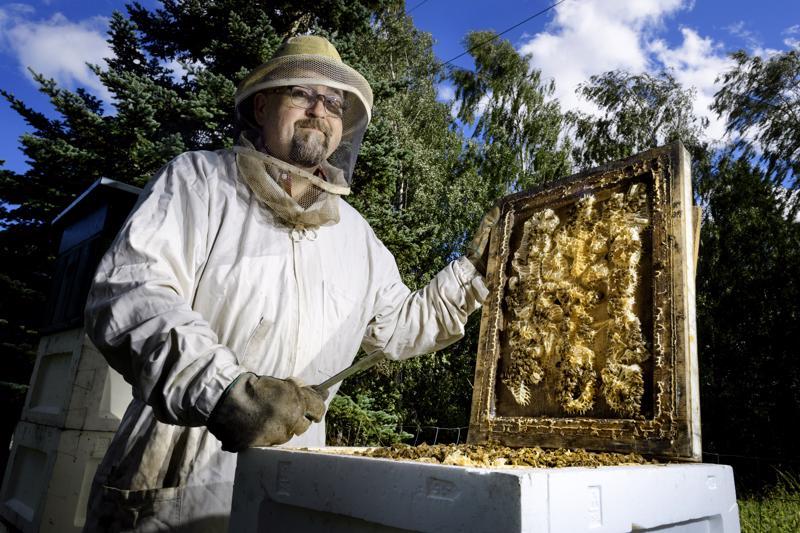 Jarkko Isokungas tuottaa hunajaa Keski-Pohjanmaalla ja hänellä on noin 40 pesää ympäri aluetta. Hunajasato vaihtelee vahvasti alueittain.