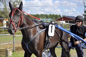 Pekka Visurin valmentama Amanda Rose on pieni tamma, mutta menoa radalla se ei ole haitannut. Tänä vuonna se on voittanut jo 8 kertaa ja kruununa Ylivieskan tuore 76-voitto.