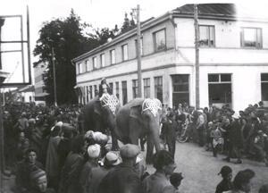 Sirkus saapui Kokkolaan ensimmäistä kertaa vuonna 1949 ja Isollakadulla nähtiin norsuja. Taustalla Öllerin talo.