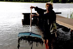 Leila Kiviaho on haravoinut rantaan ajellutta moskaa ahkerasti.