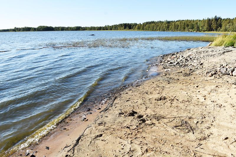 Sinilevähavainto tehtiin Hammasniemessä, mutta levää on todennäköisesti muuallakin järvessä.