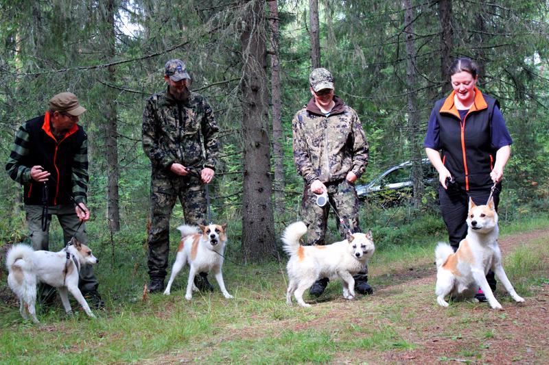 Maasto-oppaana toimineen Samuli Kyllösen mukaan koirat ovat vielä kesäterässä. Vasemmalta Heikki Pyhäluoto ja Hillakairan Bull Raahesta (43 p), Aki Seppä ja Aatto Seinäjoelta (68 p), Aatu Isoaho ja Saaga (om. Tatu ja Aatu Isoaho) Nivalasta (35 p) ja Heini Helisto ja Kaikenriistan Ruuti Oulusta (55 p).