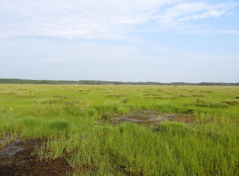 Evijärven Lampakanneva on linnustoltaan runsas, valtakunnallisesti uhanalaisia lajeja esiintyy alueella viisi: käki, tuulihaukka, kaakkuri, pensastasku ja kivitasku.