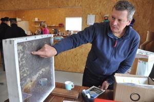 Hunajaa myynyt Timo Marjusaari oli tuonut sadonkorjuumarkkinoille laatikon, jonka sisällä kömpi pari tuhatta mehiläistä. Marjusaari näyttää, missä on kuningatarmehiläinen.