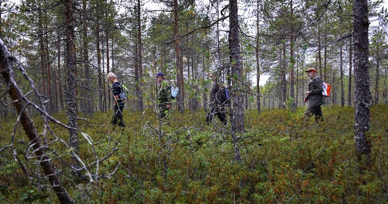 Eero Junkala, Ilkka Mäki-Petäjä, Markku Mäki-Petäjä ja Mauno Mäki-Petäjä käyvät syksyisin melkein päivittäin metsässä.