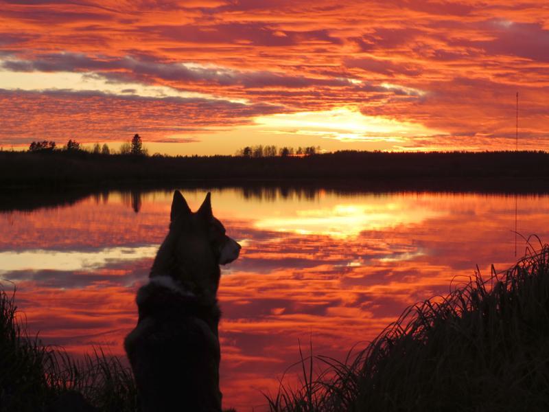 Lemmikin elämä tulee jossain vaiheessa auringonlaskuun. Jokainen lemmikin omistanut ja siitä luopumaan joutunut tietää, kuinka vaikeasta päätöksestä lopettamisessa on kyse.