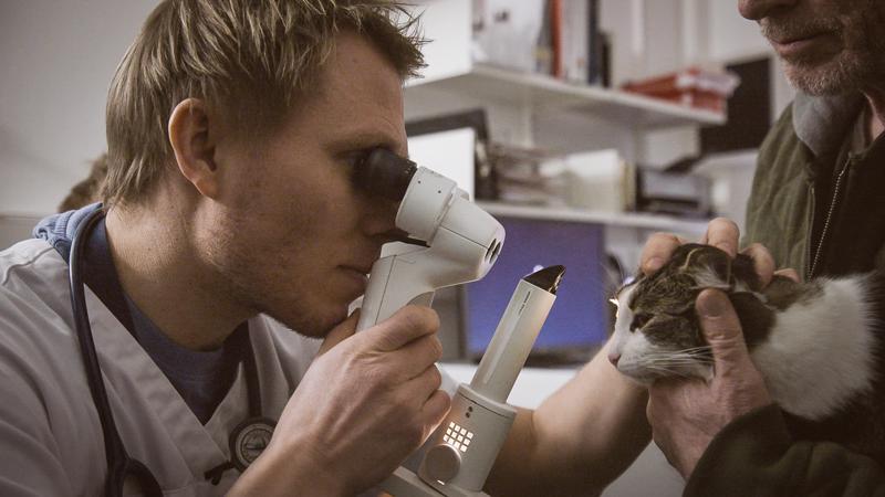 Eläinlääkäri Thomas Björkenheim tutkii avausjaksossa maatiaiskolli Mollin silmiä Helsingin Viikissä olevassa yliopistollisessa eläinsairaalassa.