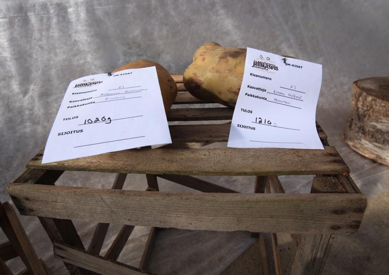 Himangalla kasvatettu peruna vei voiton ja Kannuksessa kasvatettu kakkossijan Suomen Jättikasvisyhdistyksen SM-kisoissa.