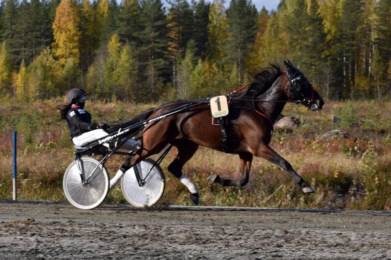 Laura Kinnusen Nice My Sin juoksi seitsemännen lähdön voittoon.