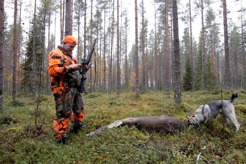 Antti-Jussi Hietaniemi kaatoi hirven vasan jahdin ensimmäisien tuntien aikana. 25-vuotias Hietaniemi on kulkenut metsällä pienestä pitäen ja lähes joka syksy hän on onnistunut ampumaan hirven. Kaadettua hirveä haukkui Ansa-koira, jolle kaato oli ensimmäinen.