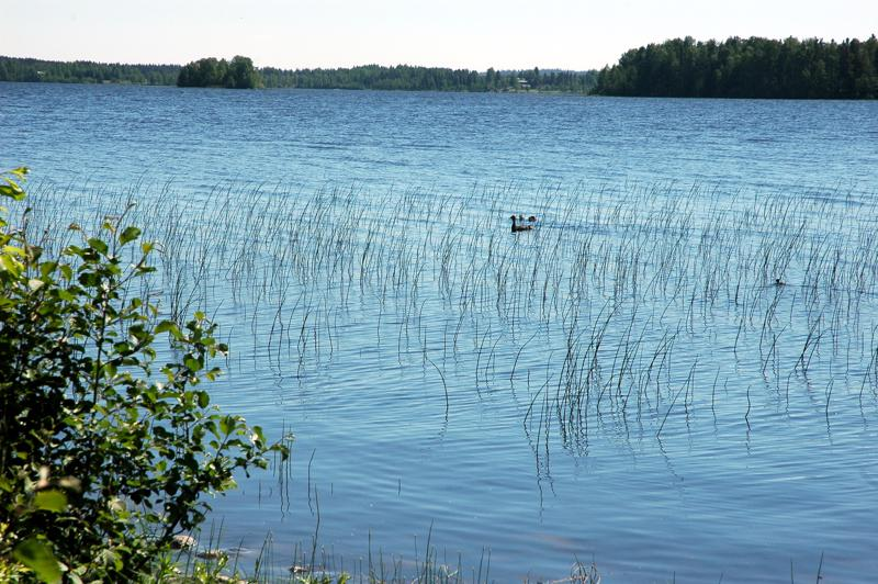 Reisjärvi lähtee mukaan Vuohtojärven kunnostushankkeeseen enintään 367 tuhannen euron osuudella.