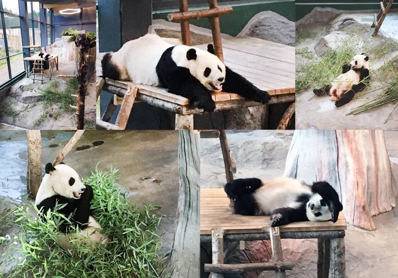 Pyry nautiskelee elämästään Ähtärin eläinpuistossa.