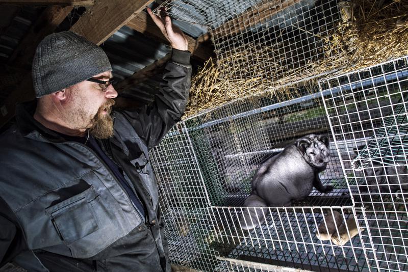 –Olemme vientiä vastaan, jos kyseisen maan eläinsuojelulaki on huonommalla tasolla kuin Suomessa, toteaa varapuheenjohtaja Lasse Joensuu Suomen Turkiseläinten Kasvattajain Liitosta.