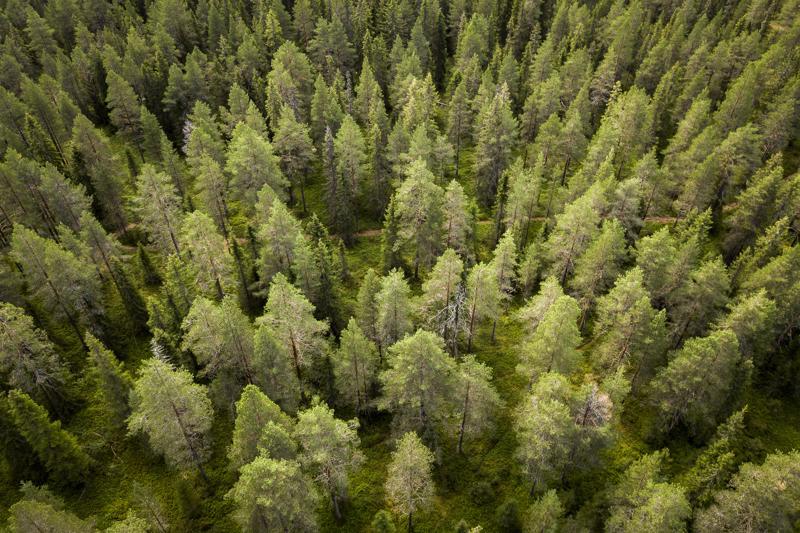 Pelkästään puiden kasvattaminen hiilinieluiksi ei kokoomuslaisten mielestä riitä, vaan hiiltä on sidottava metsien lisäksi maahan, soihin ja peltoihin.