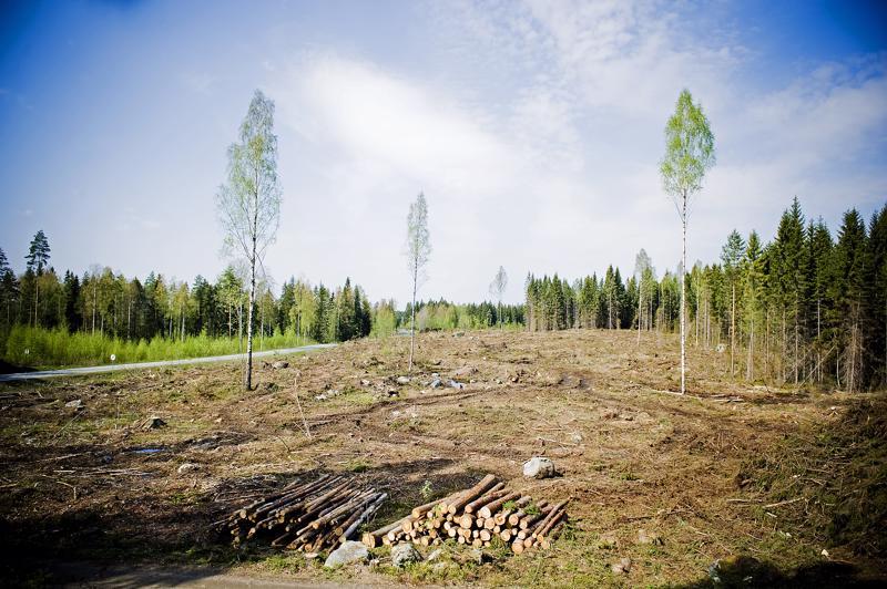 Ympäristöjärjestöjen mukaan vähintään 61 438 suomalaista allekirjoitti aloitteen avohakkuiden lopettamiseksi valtion mailla. Kuvituskuva.