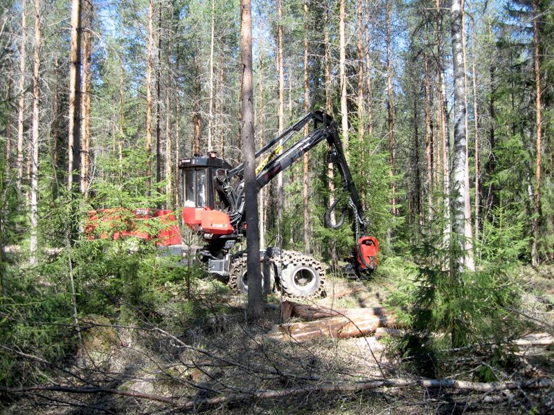 Puun korjuuta on tehty Kalajokilaaksossa kiivaaseen tahtiin.