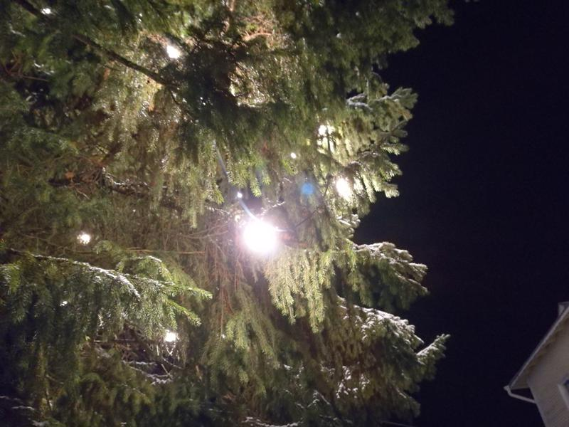 Valtavan suuressa kuusessa on jouluvalot.
