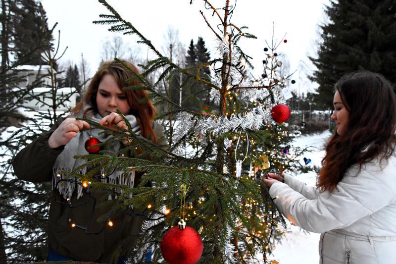 Johanna Ylioja ja Jasmin Rosengren koristelivat Haapaveden lukion joulupuuta satumetsään, joka nousi nyt toisen kerran torin laidalle. Lukio on haastanut mukaan satumetsän puita koristelemaan myös muita Haapaveden oppilaitoksia, oppilasryhmiä ja nuorison parissa työtä tekeviä tahoja. Kauneimmillaan pieni kuusimetsä on hämärän tullen.