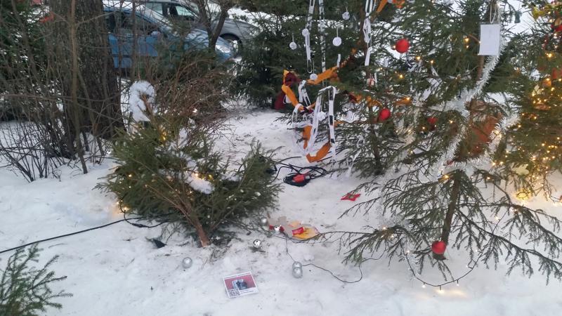 Haapavedellä joulumetsän kuusia on kaadettu ja katkottu ja koristeita on revitty maahan.
