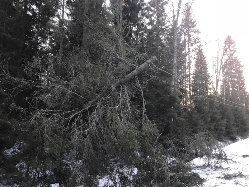 Puu kaatui Trullevintielle Kokkolassa.