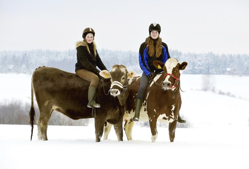 Lehmien kouluttaminen opettaa kärsivällisyyttä. Lehmät ovat oppivaisia ja niillä on hyvä muisti. Ne muistavat kaikki metsäreitit ja osaisivat kotiin yksinkin, Senja Meriläinen ja Irina Ala-Kopsala kertovat.