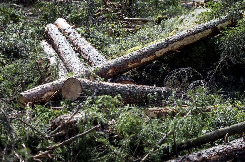 Metsätalous saattaa rehevöittää vesistöjä enemmän kuin on arvioitu.