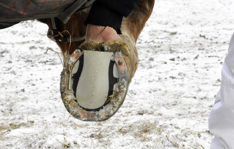 Ravihevosten kenkäpakko on voimassa kolmatta talvea.