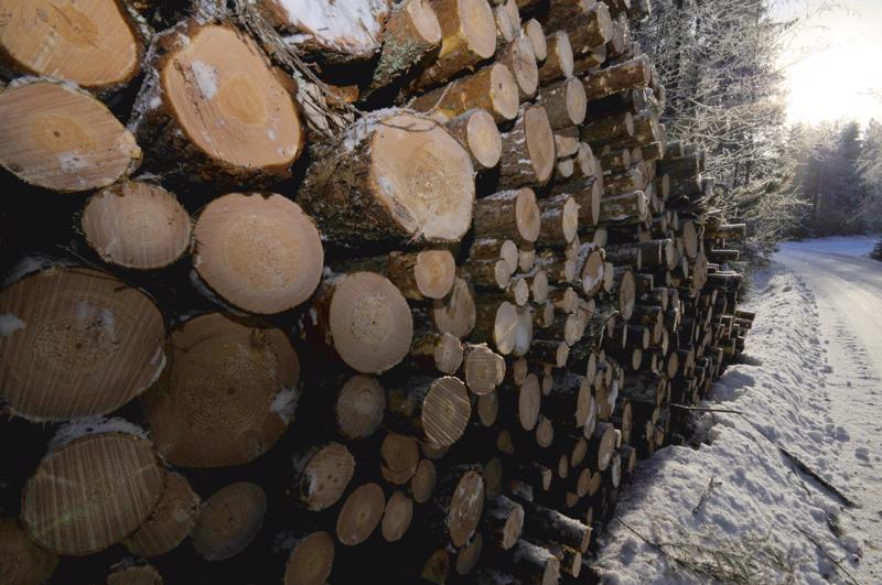 Viime viikkoina puun hintakehitys on ollut laskeva, vaikka edelleenkin hinnat ovat keskimääräistä paremmalla tasolla.