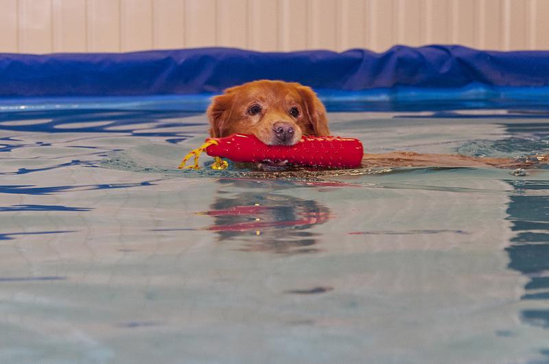 13-vuotias novaskotiannoutuja Vincent tykkää uimisesta.