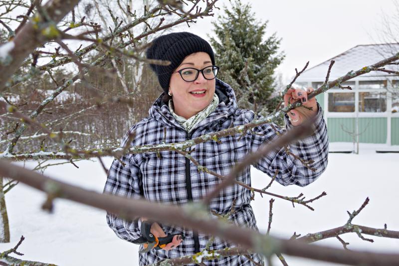 Mirja Salmulla on puutarhassaan yhteensä 17 omenapuuta, joista suurin osa on satoa tuottavia ja loput koristeomenapuita.